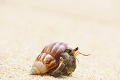 Hermit Crab on a beach Stock Photo