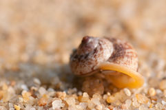 Hermit crab on the beach Stock Photo