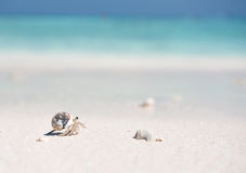 Hermit Crab on a beach. In Andaman Sea Royalty Free Stock Images