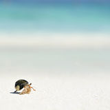 Hermit Crab on a beach. In Andaman Sea Stock Images