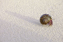 Hermit crab. On a beach Royalty Free Stock Images