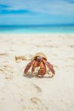 The Hermit Crab Stock Photo