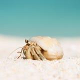 Hermit crab at beach Stock Photos