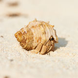 Hermit crab at beach Stock Images