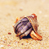 Hermit Crab On Beach Royalty Free Stock Photos