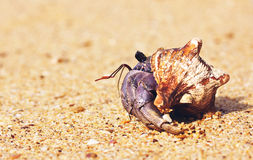 Hermit Crab On Beach Stock Images