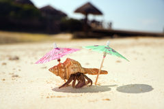 Hermit Crab Beach Bum Stock Image