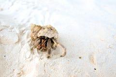 Hermit crab on the beach Stock Photo