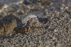 Hermit crab on the beach. Close-up of hermit crab on the beach, Marsa Alam, Egypt Royalty Free Stock Photography