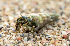 Hermit crab on beach Stock Photo