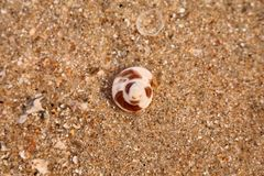 Hermit crab on beach. This is the hermit crab on beach Stock Photos