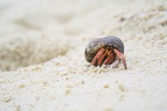 Hermit crab On the beach. In island Stock Photo