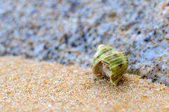 Hermit Crab on a beach Royalty Free Stock Images