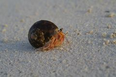 Hermit crab On the beach. In island Stock Image