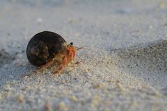 Hermit crab On the beach. In island Stock Images