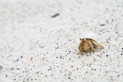 Hermit crab On the beach. In island Royalty Free Stock Images