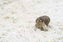 Hermit crab On the beach. In island Royalty Free Stock Photo