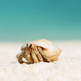 Hermit crab at beach Stock Photos