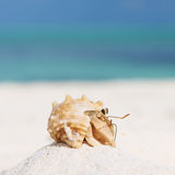 Hermit crab at beach. Hermit crab on beach at Maldives Stock Photography