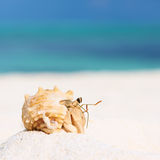 Hermit crab at beach Royalty Free Stock Images