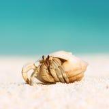 Hermit crab at beach Royalty Free Stock Photos