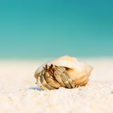 Hermit crab at beach. Hermit crab on beach at Maldives Royalty Free Stock Photo