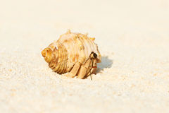 Hermit crab at beach Stock Photo