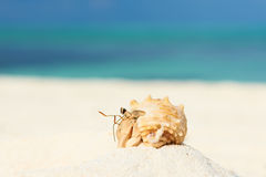Hermit crab at beach. Hermit crab on beach at Maldives Royalty Free Stock Photography