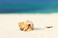 Hermit crab at beach. Hermit crab on beach at Maldives Royalty Free Stock Photos