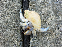 Hermit Crab on the beach, Onna, Okinawa. Hermit Crab on the beach in Onna, Okinawa Prefecture Royalty Free Stock Image