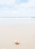 Hermit crab on the beach. Royalty Free Stock Photography