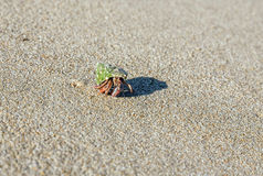 Hermit crab on the beach. On sand background.Close-up Royalty Free Stock Photo