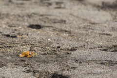 A Hermit Crab on the beach Royalty Free Stock Images
