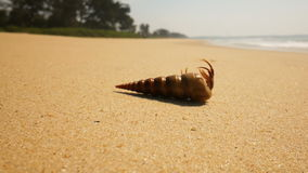 Hermit crab on a beach in sea stock video