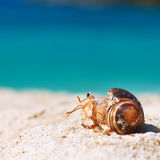Hermit crab at beach. Hermit crab on beach at Seychelles Stock Photography
