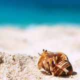 Hermit crab at beach. Hermit crab on beach at Seychelles Stock Images