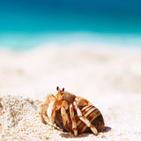 Hermit crab at beach. Hermit crab on beach at Seychelles Royalty Free Stock Images