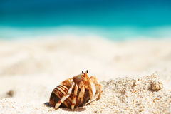 Hermit crab at beach Stock Photography