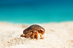 Hermit crab at beach. Hermit crab on beach at Seychelles Stock Photos