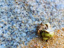 Hermit Crab on a beach Royalty Free Stock Photography