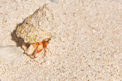 Hermit crab on the beach of a tropical island. Stock Photos