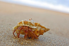 Hermit crab on the beach Stock Images