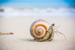 Hermit crab on beach. Stock Photo