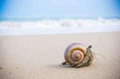 Hermit crab on beach. Stock Photos