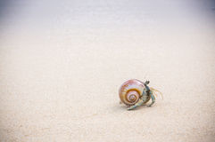 Hermit crab on beach. Royalty Free Stock Photos
