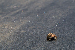 A hermit crab. On a black sand beach in Thailand Royalty Free Stock Image