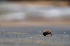 A hermit crab Stock Photo