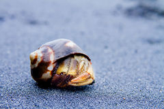 Hermit Crab on black sand close up Stock Photography
