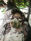Hermit crab on the branch beach in Thailand Stock Photos