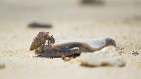 Hermit crab climb coral stock photo